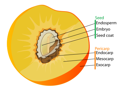 Drupefruit