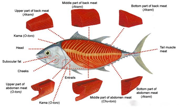 Hon Maguro Southern Bluefin Mesubim