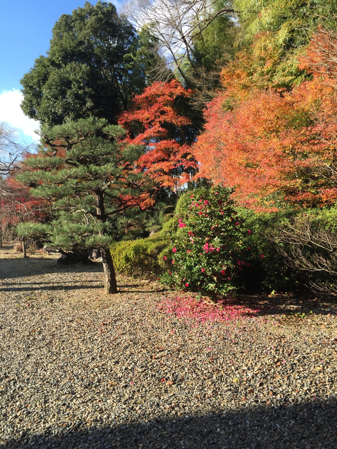 Momijigari |Kyoto Leaves| – MESUBIM